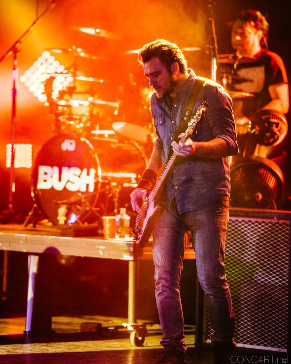 Bush photo by Sean Molin 6